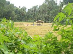 farmers rest room, while there working in paddy fields,in srilanka!!!!!!!!!!!!!!!!!