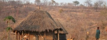 "NORTHERN ZAMBIA EXPEDITION SAFARI (2013)  ""Luangwa north & south"" CAMPING EXPEDITION"
