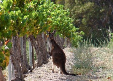 SOUTH AUSTRALIAN WINE COUNTRY